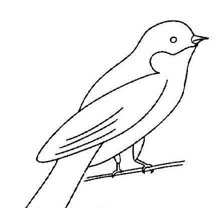 小鸟简笔画,高清小鸟简笔画图片大全