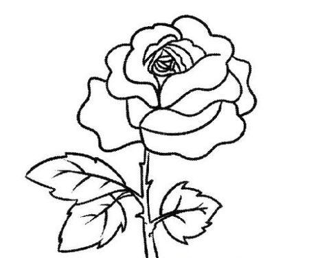 玫瑰花简笔画大全,玫瑰花怎么画 从玫瑰花简笔画学起