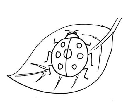 七星瓢虫简笔画,瓢虫简笔画大全,教宝宝学会观察生活小昆虫