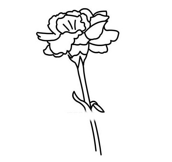 康乃馨简笔画,高清康乃馨简笔画大全,教宝宝学会花朵的绘画!